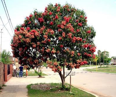 arboles de argentina