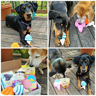 3 rescue dogs pooch perks subscription box