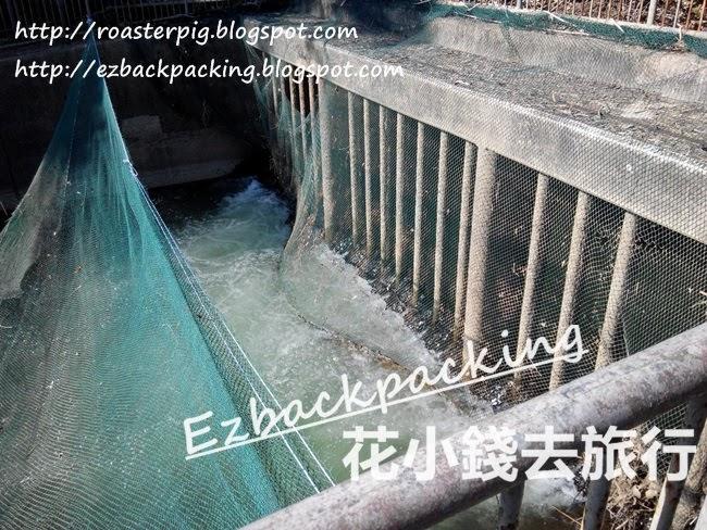 東江水抵達大欖涌水塘
