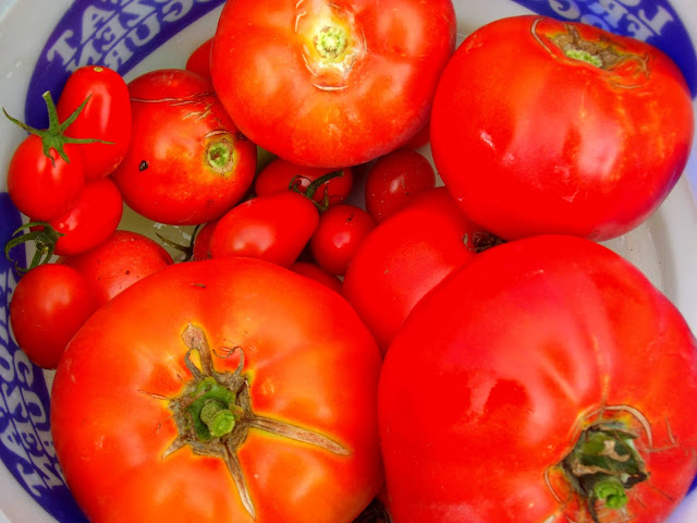 Tomato Culture and Uses: