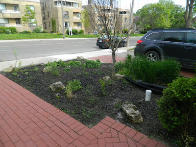Midtown Toronto new full sun perennial garden before by Paul Jung Gardening Services