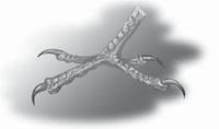 kaki Burung pelatuk