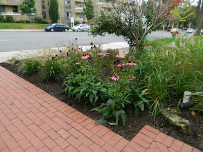Midtown Toronto Fall Cleanup after by Paul Jung Gardening Services