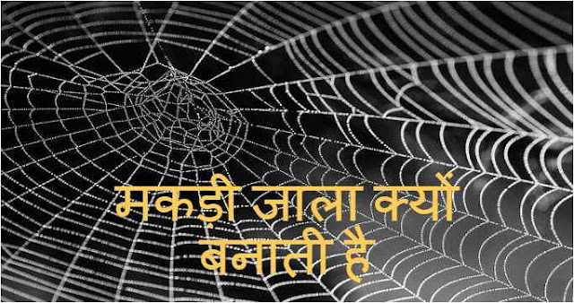 Why Make Spider Web