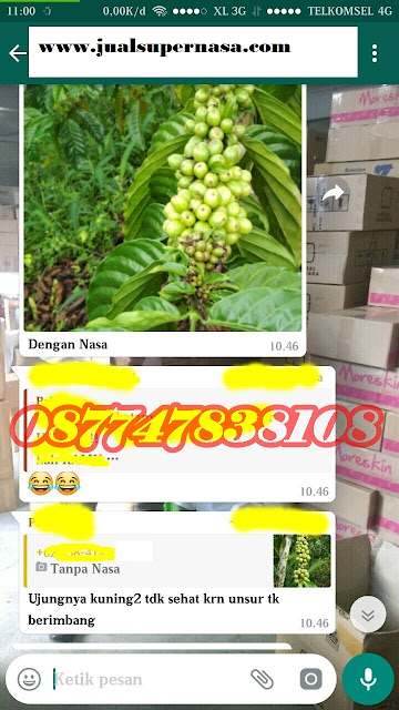 Kesaksian Budidaya Tanaman Kopi Nasa Lampung