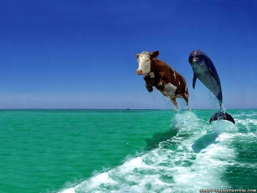Free Funny Animal Wallpaper for Windows Users Dolphin   Cow Wallpaper    http   4 bp blogspot com  TPzrL6J14SI TaicRZwsICI AAAAAAAAB9I 1TI3cHnFu6E s1600 funny  animal wallpapers  25284 2529 jpg