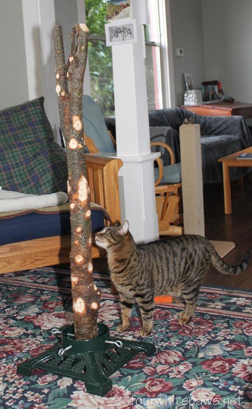 Christmas Trees White