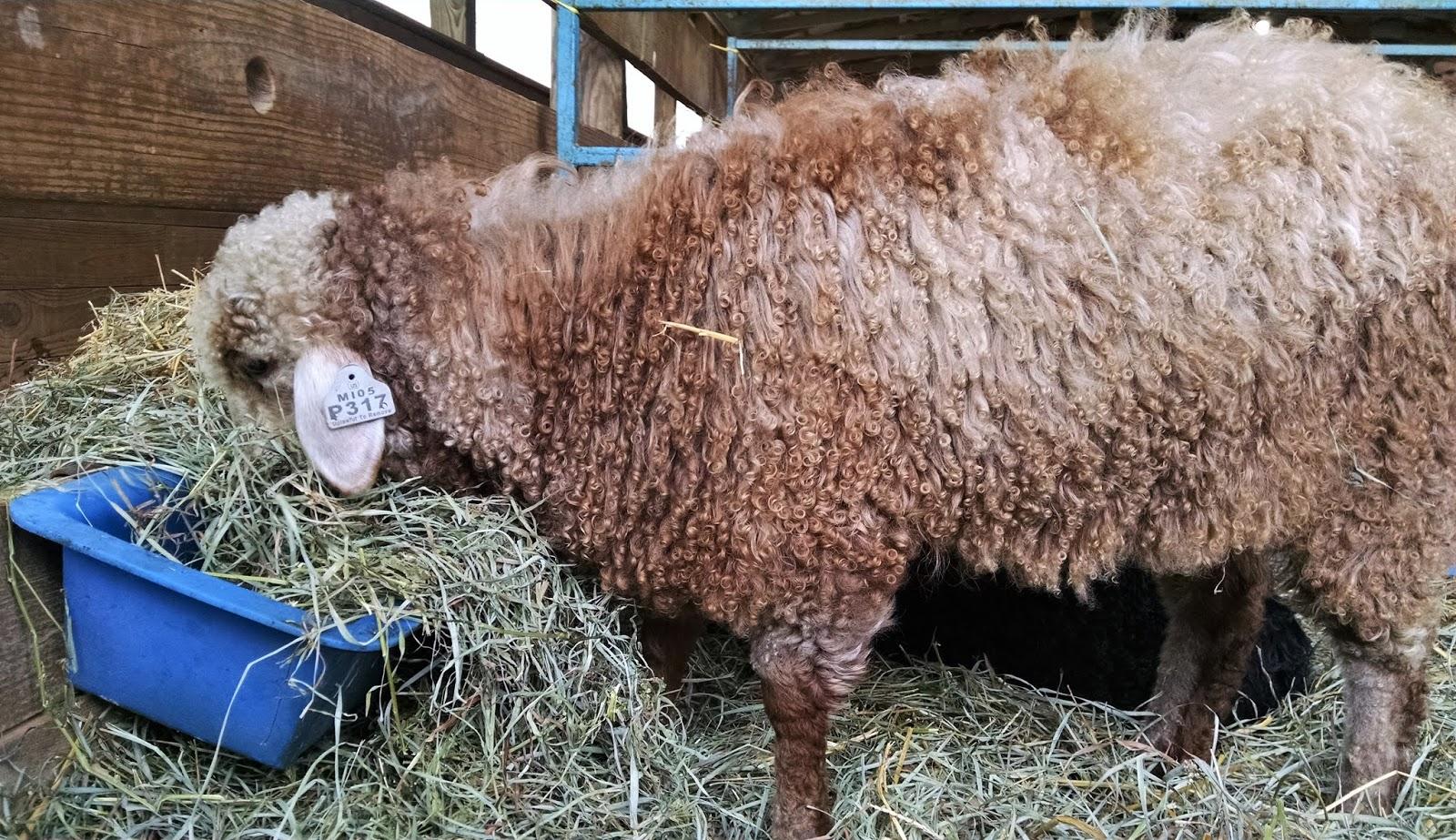 Knee Deep in Sheep: May 2018
