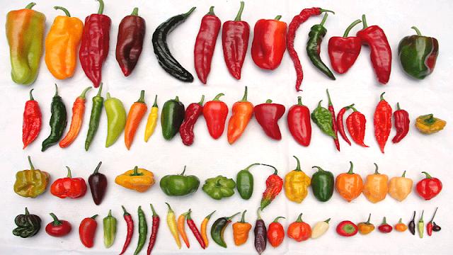Tipos de Pimentas (Imagem: Reprodução/Débora Hemkemeier – Nutricionista)