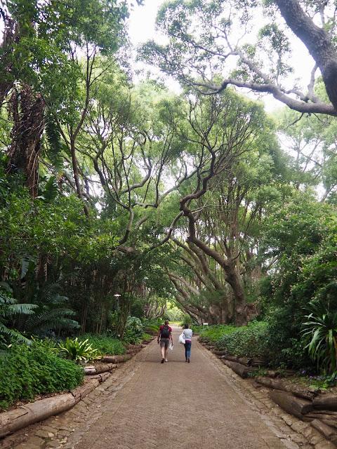 Kirtsenbosch Botanic Gardens, Cape Town, South Africa