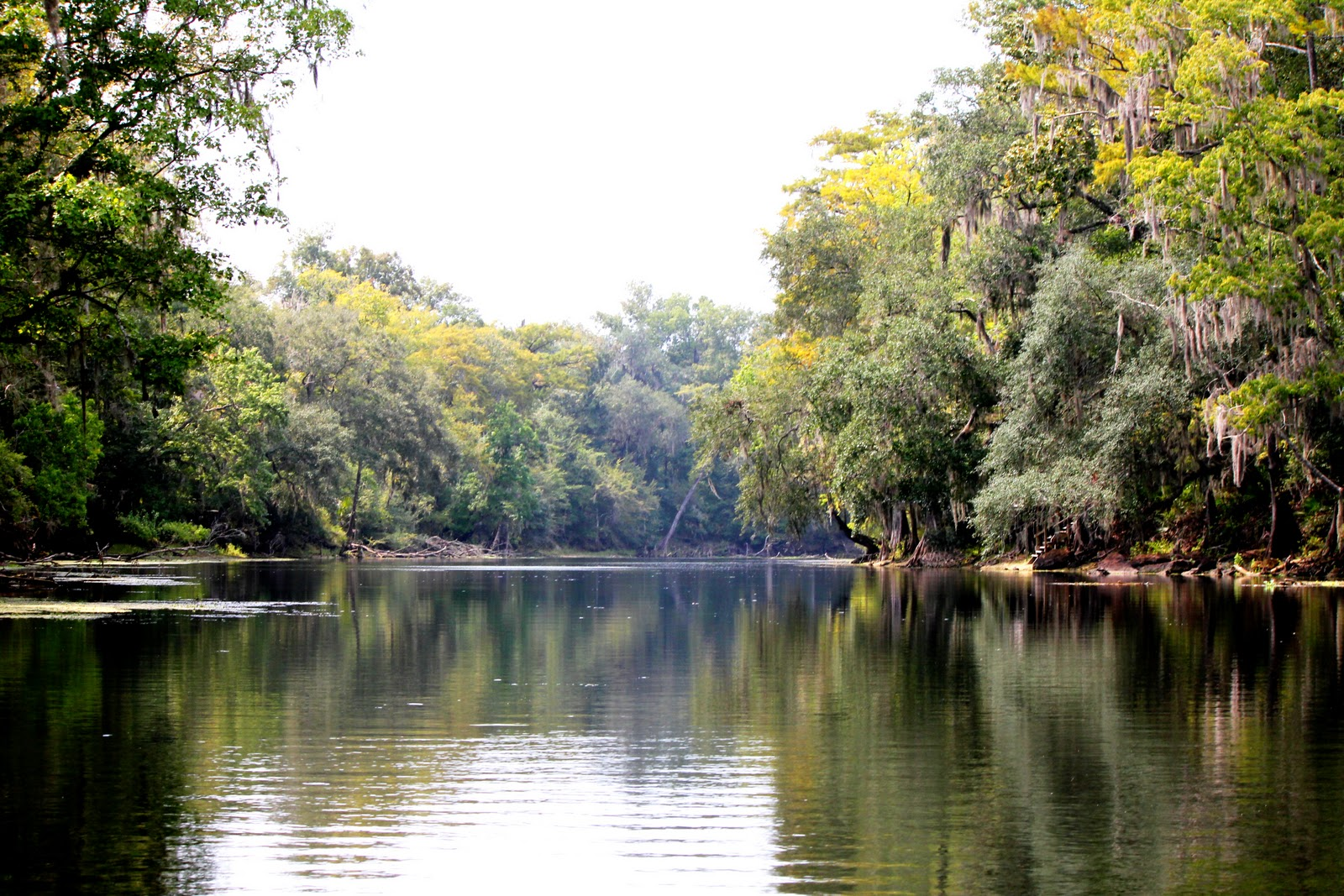 Advocates applaud Blue Springs purchase - News