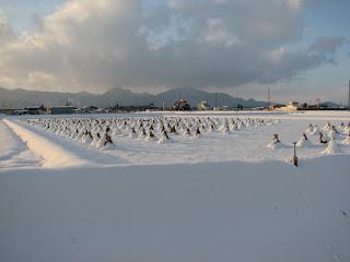 思い出の初詣 田んぼに積もる雪