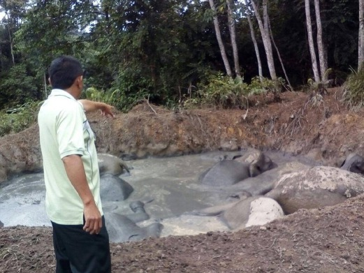 7 Ekor Gajah Mati Terperangkap Dalam Kolam Bekas Kuari Lama