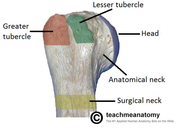 Ortho Fracture Series 1: Proximal Humerus Fracture
