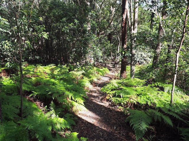 Rainforest Track Diamond Head Loop Walk