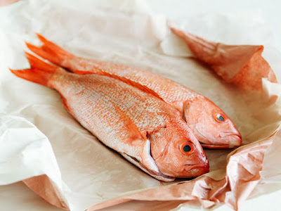 What Eats The Red Snapper as Their Natural Predators?