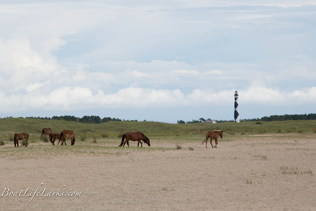 Wild Horses at Shackelford Banks