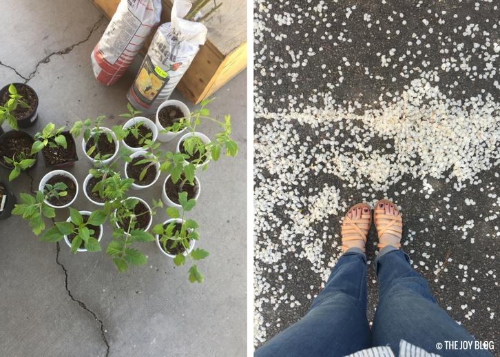 Garden Updates: Mid-Spring 2018 // www.thejoyblog.net