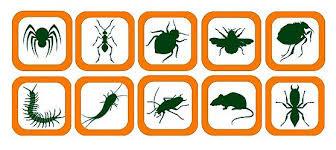 1 vài loại côn trùng thường gặp hiện nay