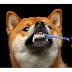 Τι σημαίνει υγιή δόντια στο σκύλο;....