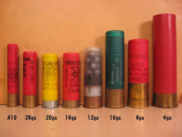 Comparison Picture of Shotgun Shell Sizes