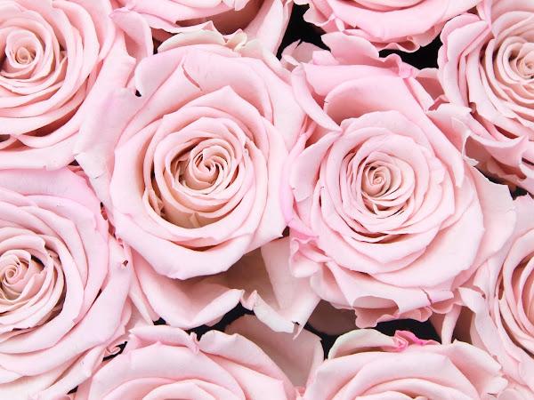 UPDATE | Blijft een flowerbox lang mooi?