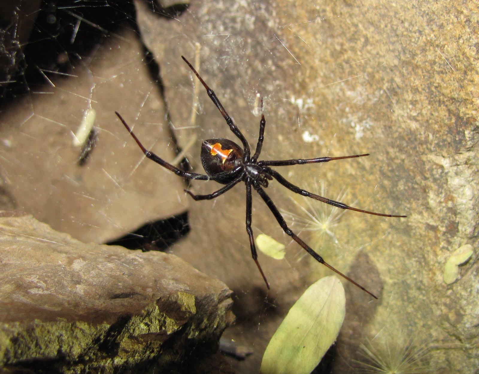 Bug Eric: July 2011