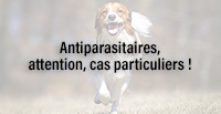 Antiparasitaires, attention, cas particuliers !