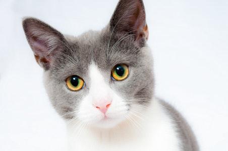 Fakta Menarik Kucing