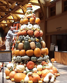 Large towering pile of many different kinds of squash being built by a man standing on a ladder inside a very large room