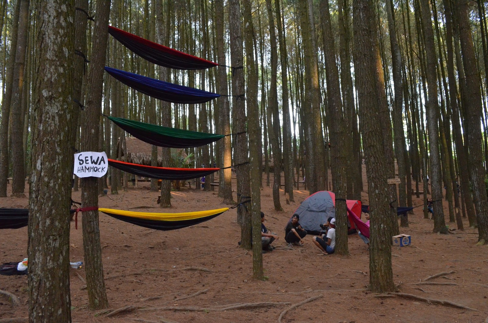 Mbulan: Wajah Baru Hutan Pinus Imogiri