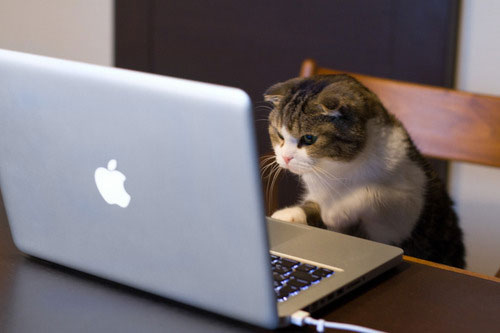 Image result for cat on laptop