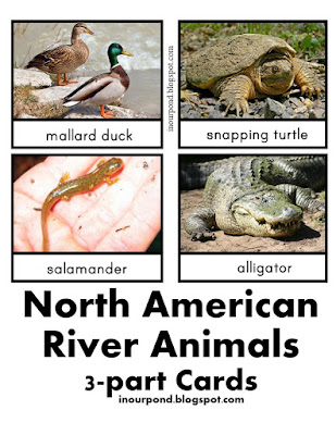 FREE 3-Part Cards for Safari Ltd River Toob from In Our Pond