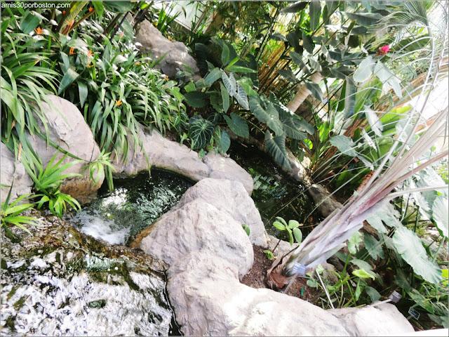 Jardín Botánico de Montreal: Molson Reception Centre Arroyo
