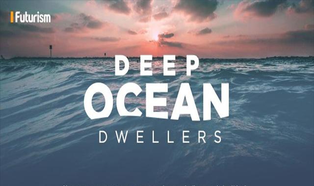 Deep Sea Creatures