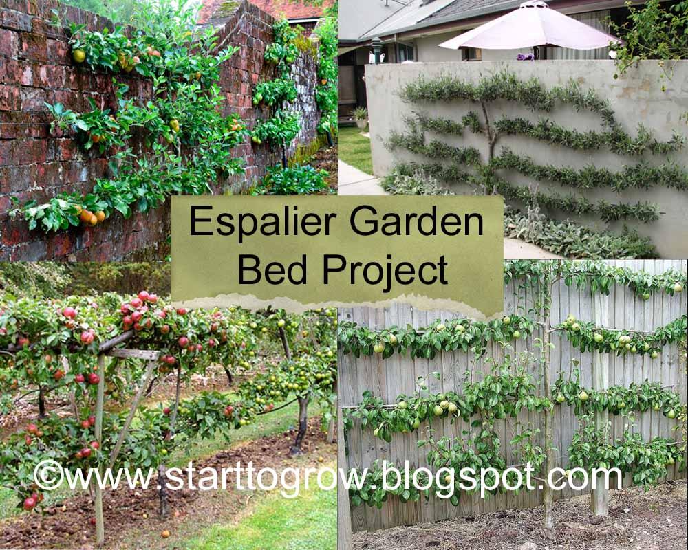 Espalier Garden Redux: Start To Grow: Espalier Garden Bed Project