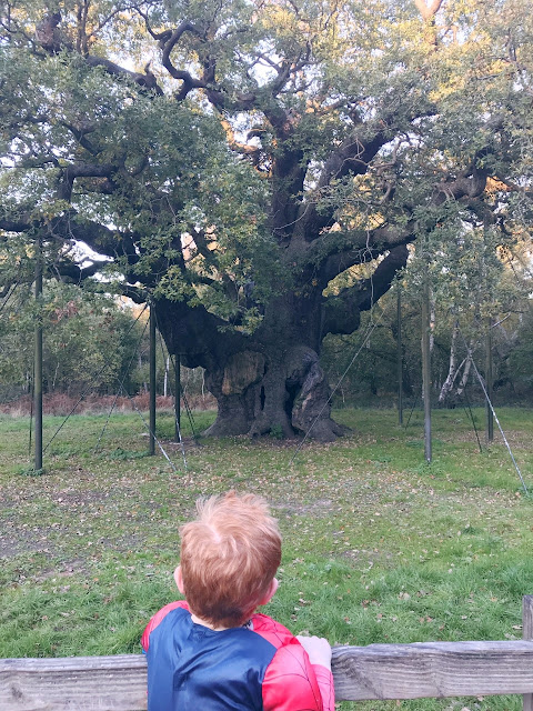 Red haired little boy looking at a large oak tree