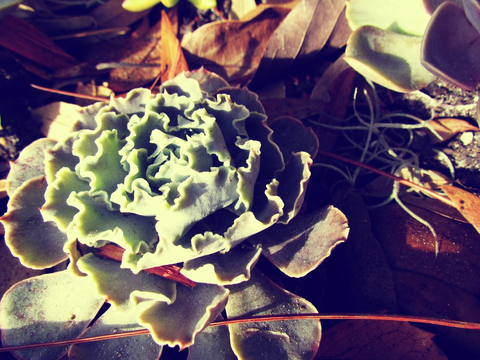 Garden Green Succulent Plant Urban Gardening