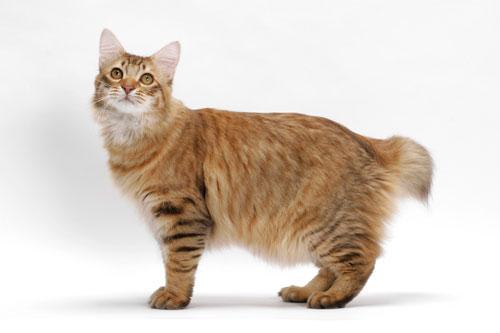 10 Baka Kucing Paling Rare Meh Pilih Kekucing