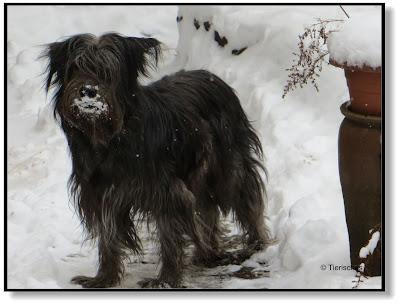 Lotte im Schnee