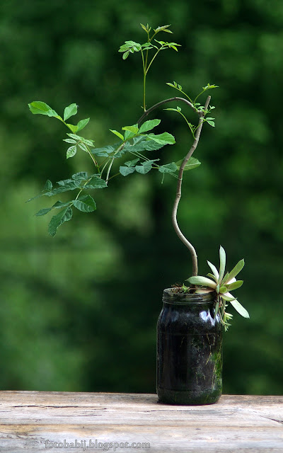 http://fotobabij.blogspot.com/2015/08/bonsai-w-soiku-i7ua.html