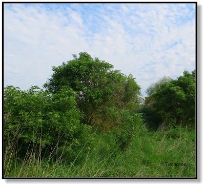 Wildgebiet