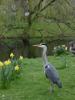 Régent 's Park, malooka