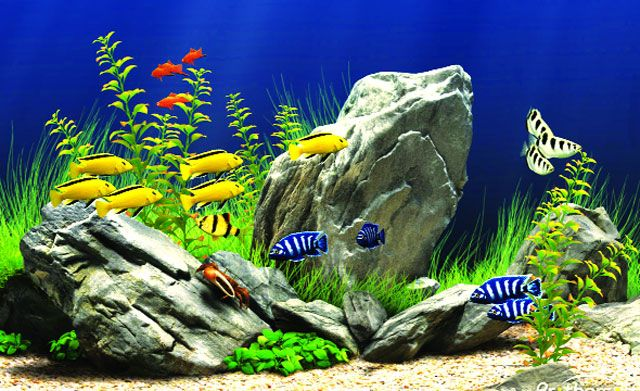 Những vấn đề cần lưu ý khi chọn bể nuôi cá và chăm sóc cá cảnh