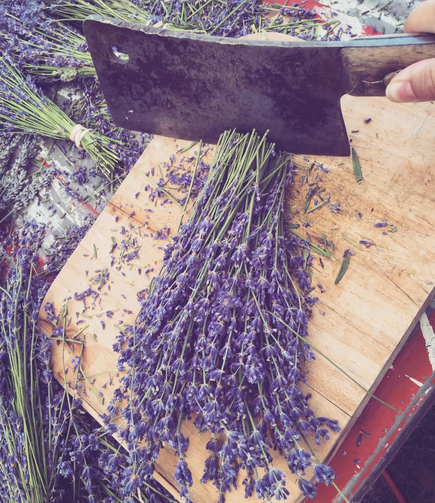 Best Uses For Fresh Lavender