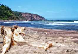 Pantai Jolosutro Yang Eksotik