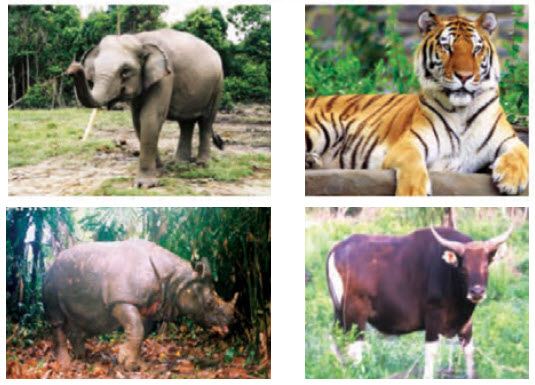 Persebaran fauna di indonesia bagian barat tengah dan timur