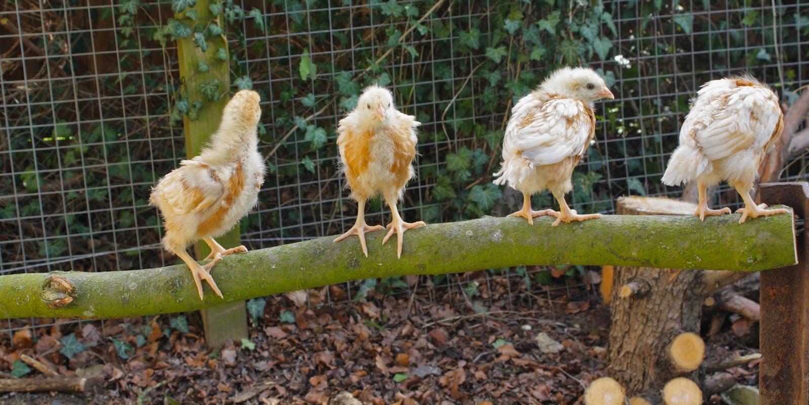 chicks garden ash cottage