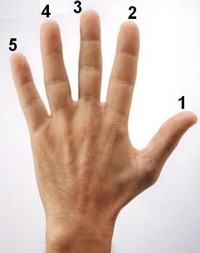 Nomes dos dedos das mãos e dos pés