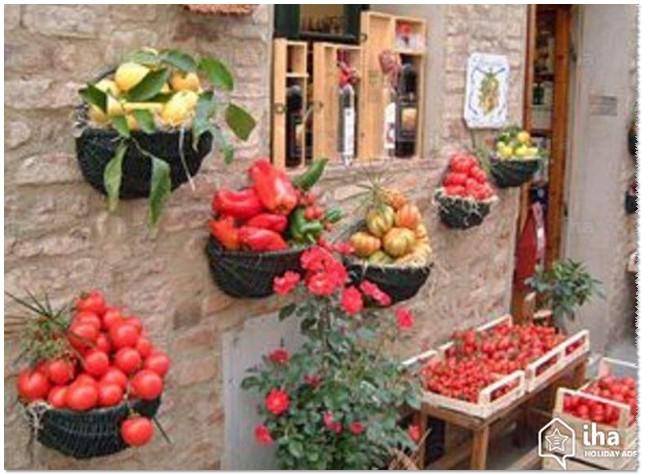 Jenis Sayuran yang Cocok ditanam di Pekarangan Rumah